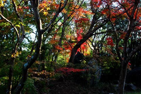 印旛の離れの紅葉2