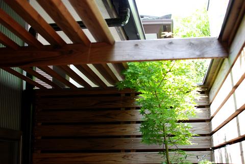 坪庭のパーゴラと紅葉