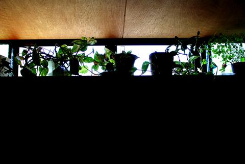 網戸と鉢植え