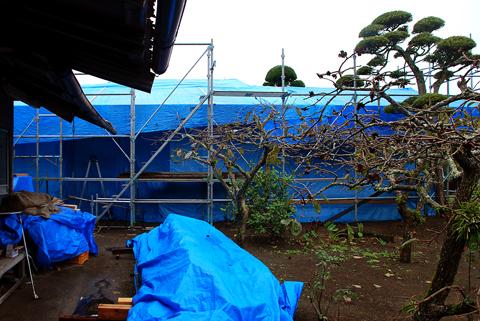 雨から木材を守るために張られたブルーシート