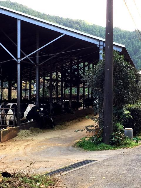 千葉の牛舎